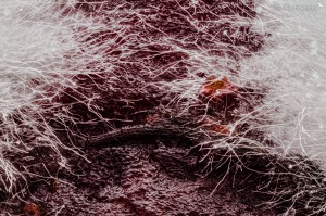 Beetroot Mould Componon 28mm reversed onto Minolta 200mm lens. Focus increment 20 microns, 189 images. Day 3 of mould growth.